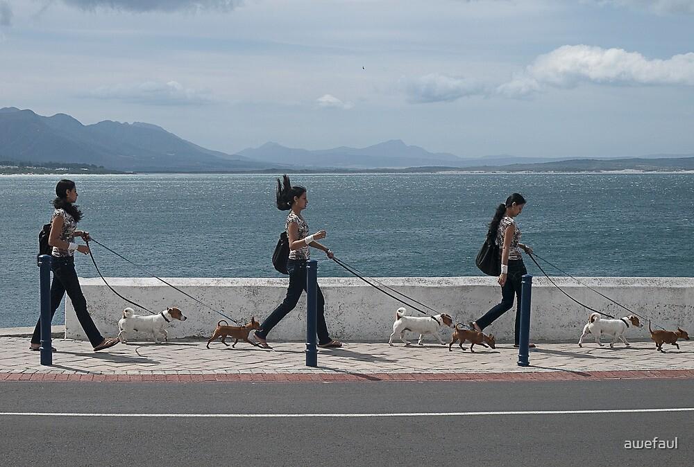 Walk, walk, walk the dogs by awefaul