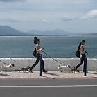 Walk, walk, walk the dogs by awefaul
