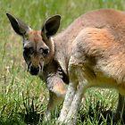 Kangaroo by Caroline Hannessen
