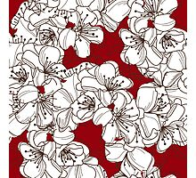 White Blossoms on Dark Red Photographic Print