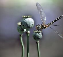 Insects by Savannah Gibbs