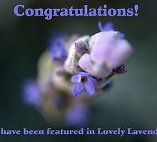 Lavender Love Banner by Katrina Freckleton