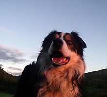 """""""Heaven goes by favor. If it went by merit, you would stay out and your dog would go in."""" by Michael Haslam"""