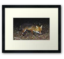 Fluffy The Fox Framed Print