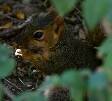 Squirrel nibbles in seclusion by agenttomcat