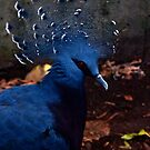 Victoria Crowned Pigeon by agenttomcat