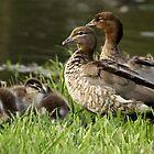 A Little Family by Joy Rensch