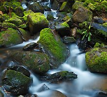 Myrtle Gully Rivulet, Tasmania by Chris Cobern