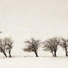 Untitled by Daphne Kotsiani