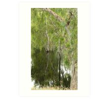 FLOODED FOREST NSW Art Print