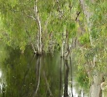 FLOODED FOREST NSW by Stewart Davey