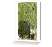 FLOODED FOREST NSW Greeting Card