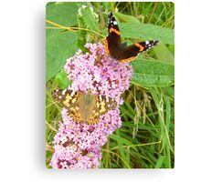 "Red Admiral & Painted Lady share a ""Bud"" Canvas Print"