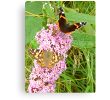 """Red Admiral & Painted Lady share a """"Bud"""" Canvas Print"""