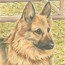 Sophie the German Shepherd by FranEvans