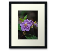 Noosa Flower and Insect Framed Print