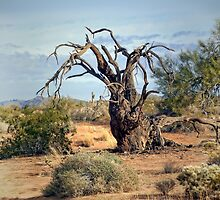 Gnarly Tree by CarolM