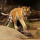 Restless Tiger by Usha Ganesh
