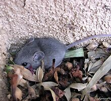 There's A Mouse At Our House by Loree McComb