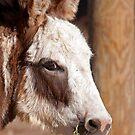 Donkey Nose by imagetj
