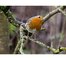 A Cheeky Robin Says Hello Photographic Print
