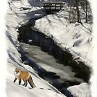 Fox In Snow by Kenneth Hoffman