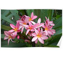 Wonderful pink flowers Poster
