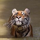 The Tiger look by Anne Young