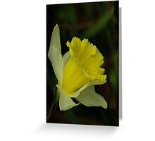 Yellow Daffodil  (Spring) Greeting Card