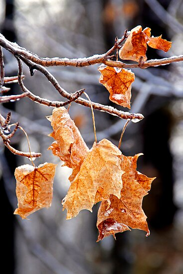 After the Freezing Rain 4 - Leaves by Debbie Pinard
