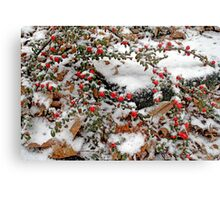 Snow on Cottonwood - Dunrobin Ontario Canvas Print