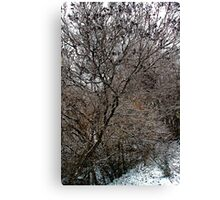 After the Freezing Rain 5 - Lilac Tree Canvas Print