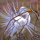 Egret Building a Nest by TJ Baccari Photography