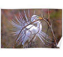 Egret Building a Nest Poster