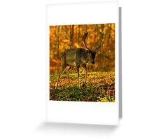 Woodland sunset Greeting Card