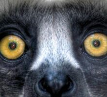 Coquerel's Sifaka Sticker