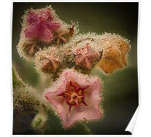 Delicate, Cranbourne Botannical Gardens Poster