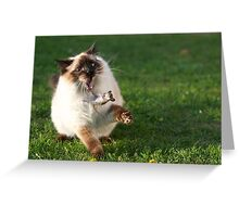 Random Cat Greeting Card
