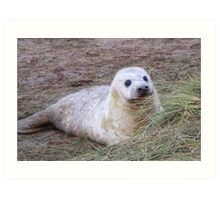 Sweet Seal - Donna Nook Art Print