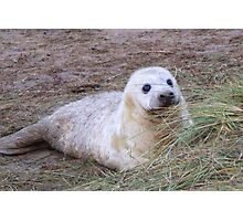 Sweet Seal - Donna Nook Photographic Print
