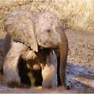 BABY ELEPHANT MUDBATH - SERIES: # UP CLOSE AND PERSONAL WITH ELPHANTS by Magriet Meintjes