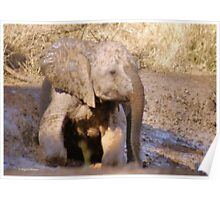BABY ELEPHANT MUDBATH - SERIES: # UP CLOSE AND PERSONAL WITH ELPHANTS Poster