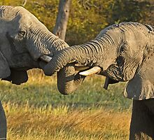 Zambia - Elephants in Kafue NP by Marieseyes