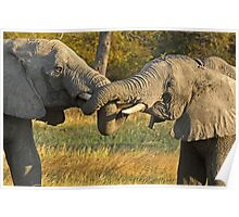 Zambia - Elephants in Kafue NP Poster