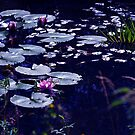Waterlilies by Aase