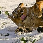 Playing in the snow by Tony Walton