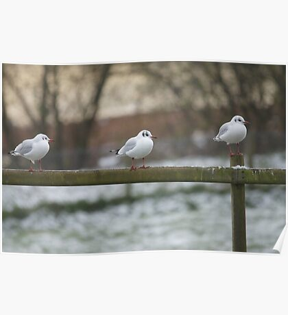 Seagulls Getting Ready for a Cold Night Ahead Poster