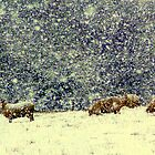Sheep in Snow by Rayworsnop