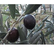 The olives ... Photographic Print