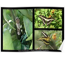 Butterfly Collage ~ Giant Swallowtail Poster